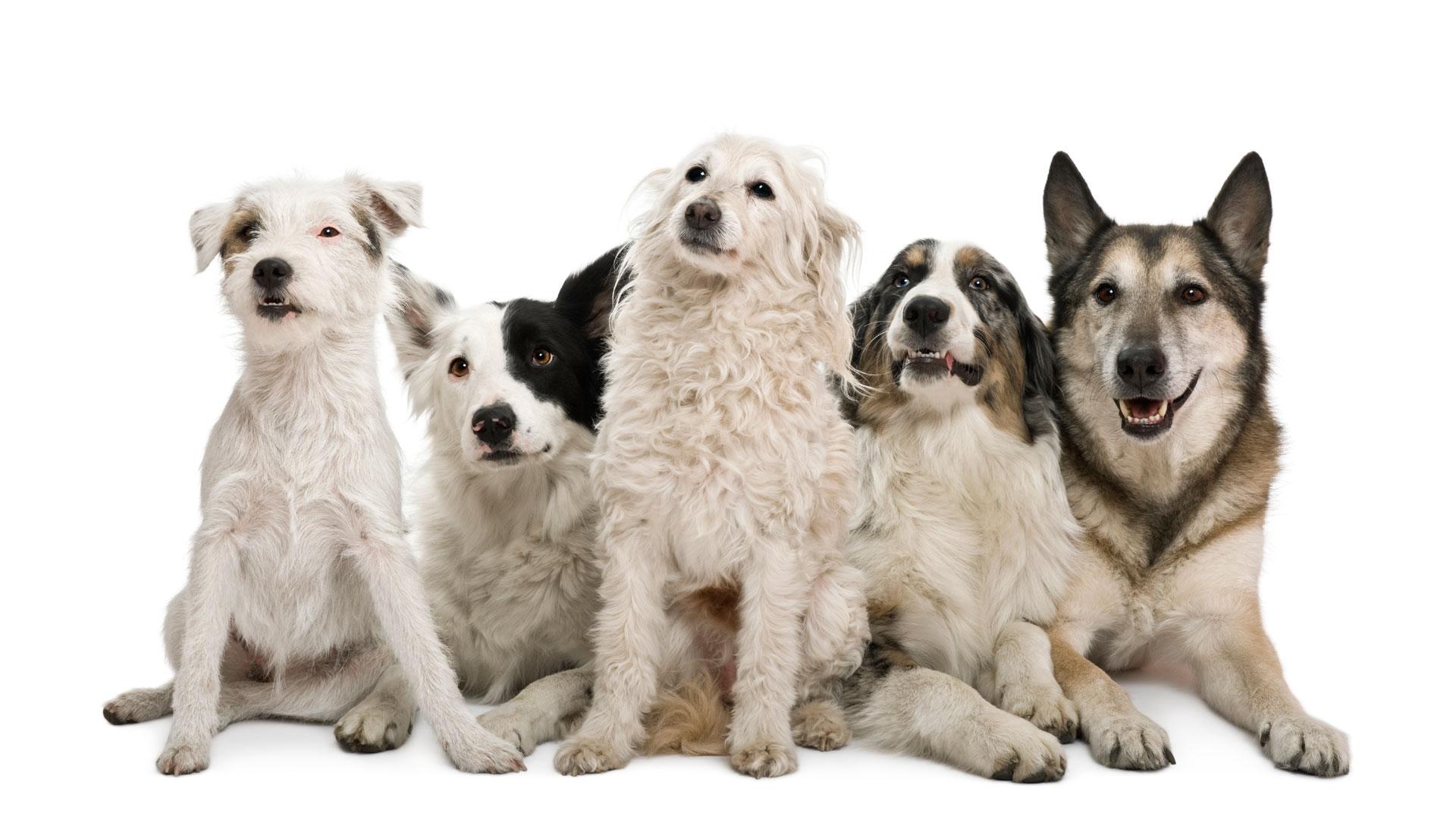 Salonen_dogs